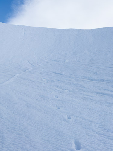 Coyote(?) tracks over a high col