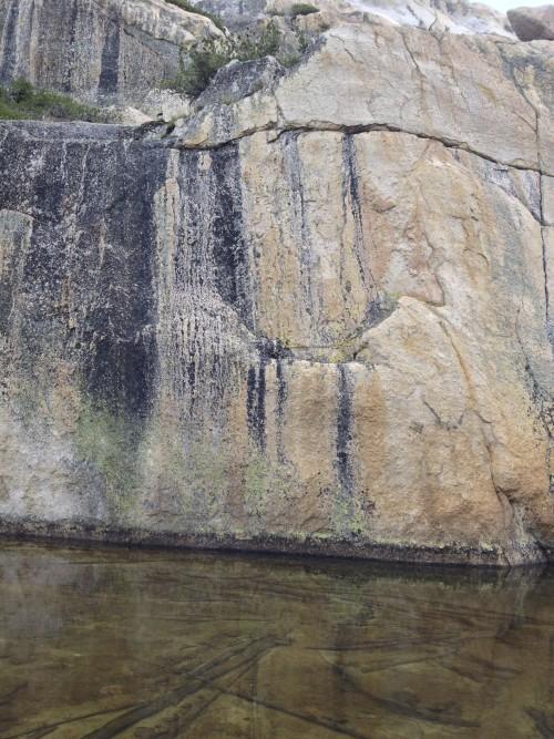 Cool Alpine Lichen